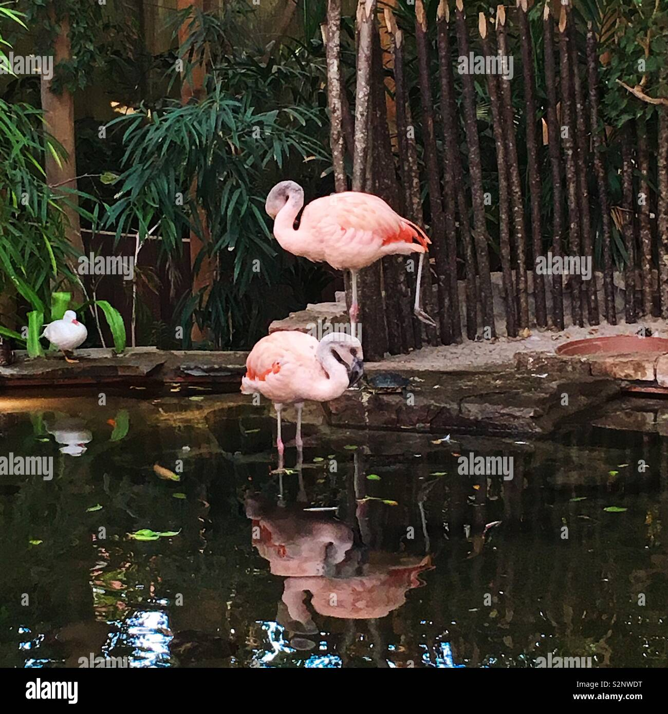 Flamingos hanging out at port Zealand's, Netherlands - Stock Image
