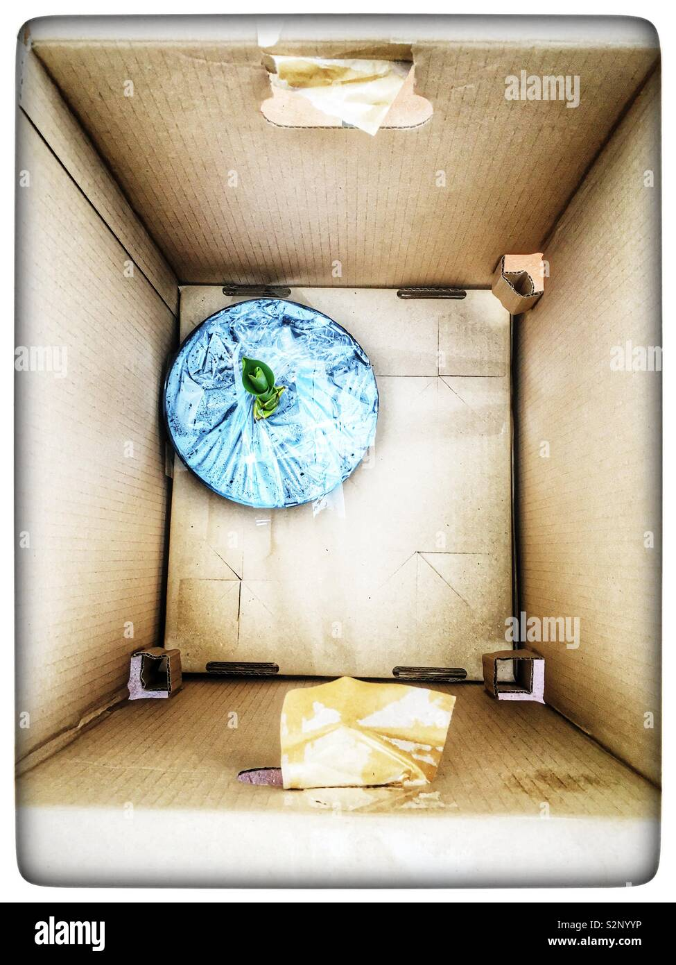 Plant sent though the post in oversized cardboard box - Stock Image