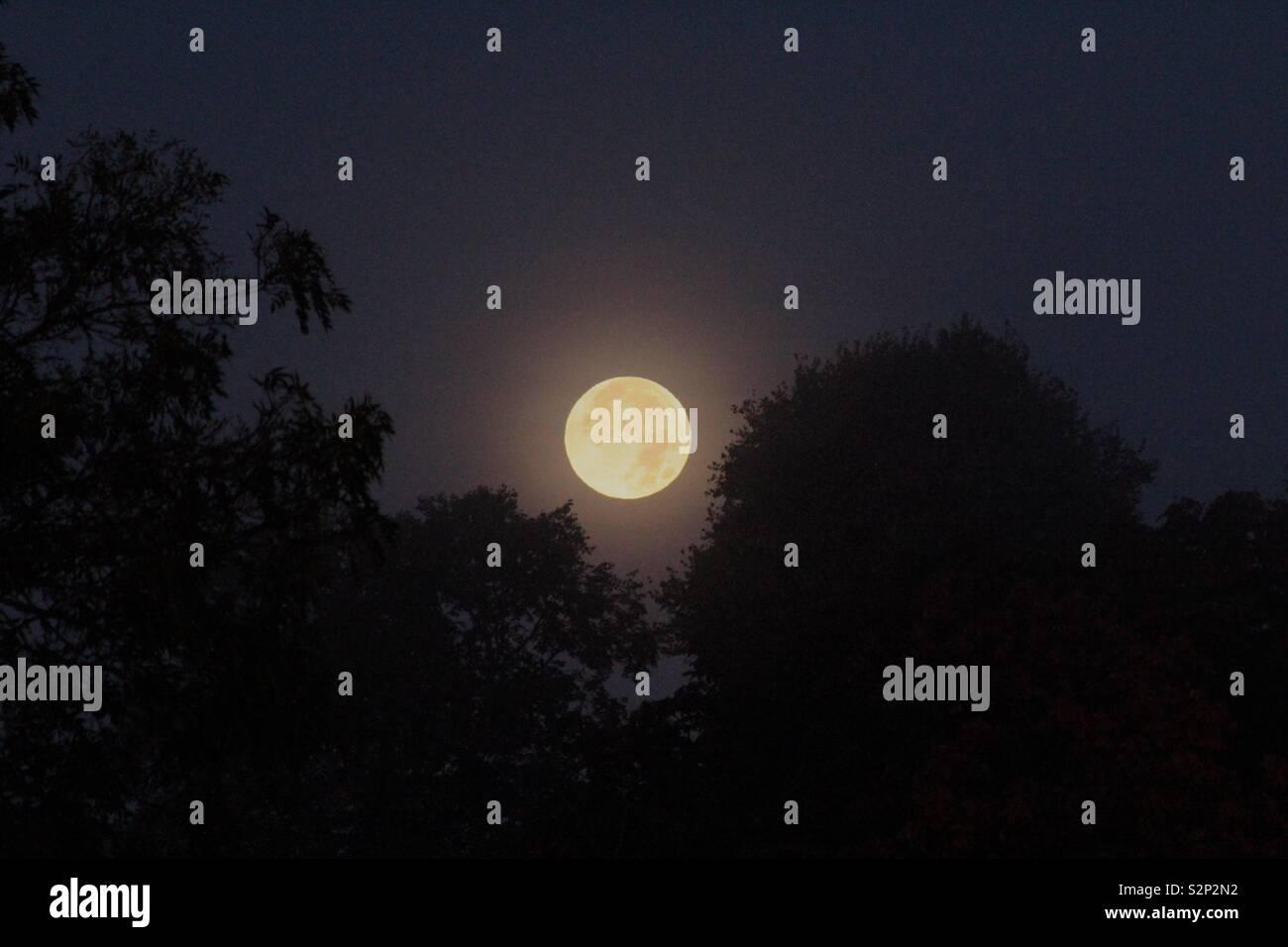 Moon - Stock Image