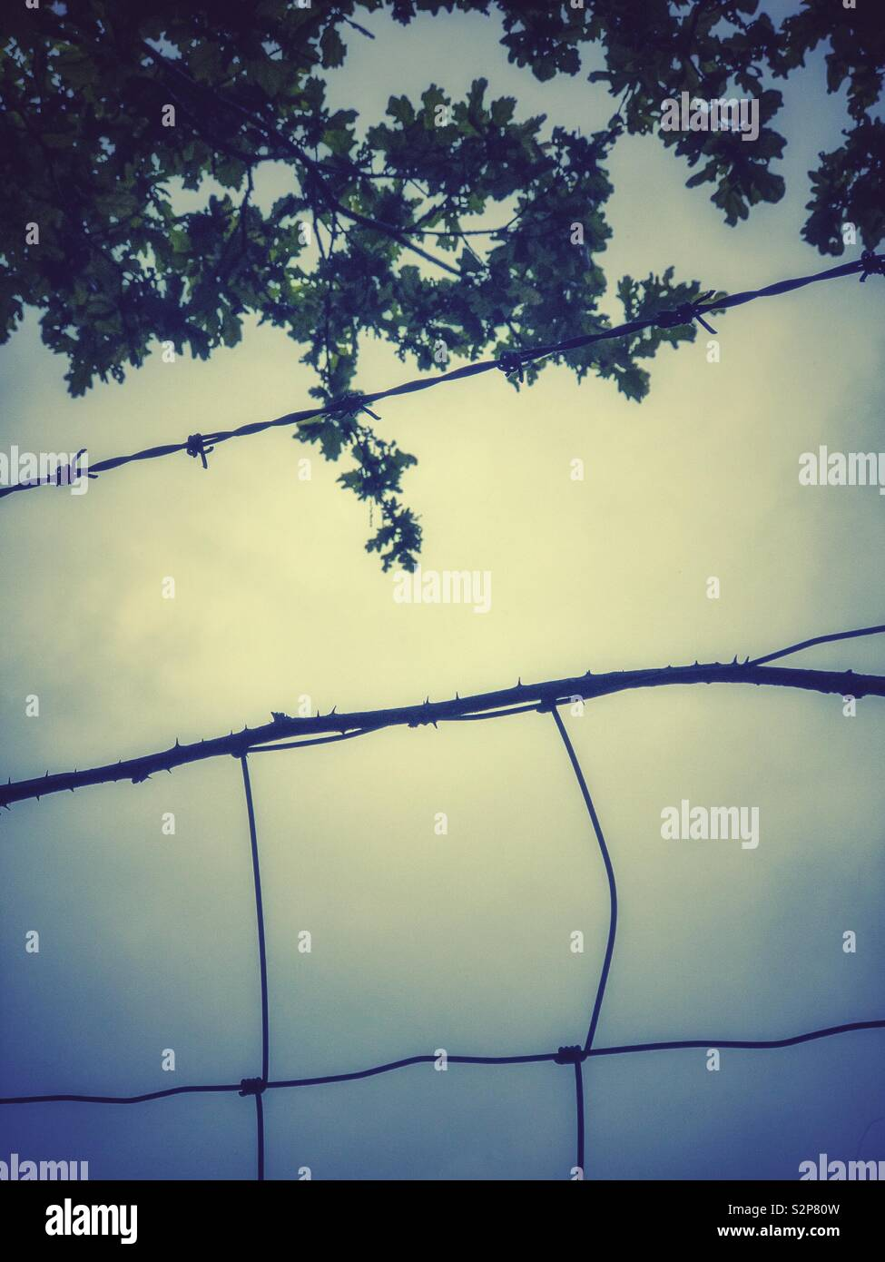 Barbed wire fence and overhanging tree. - Stock Image