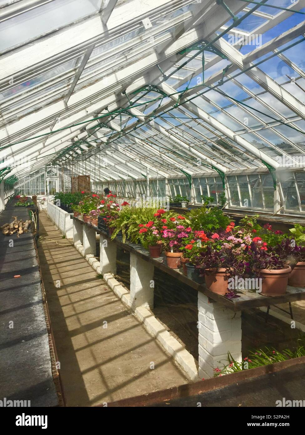 Sunshine in a greenhouse with pot plants - Stock Image