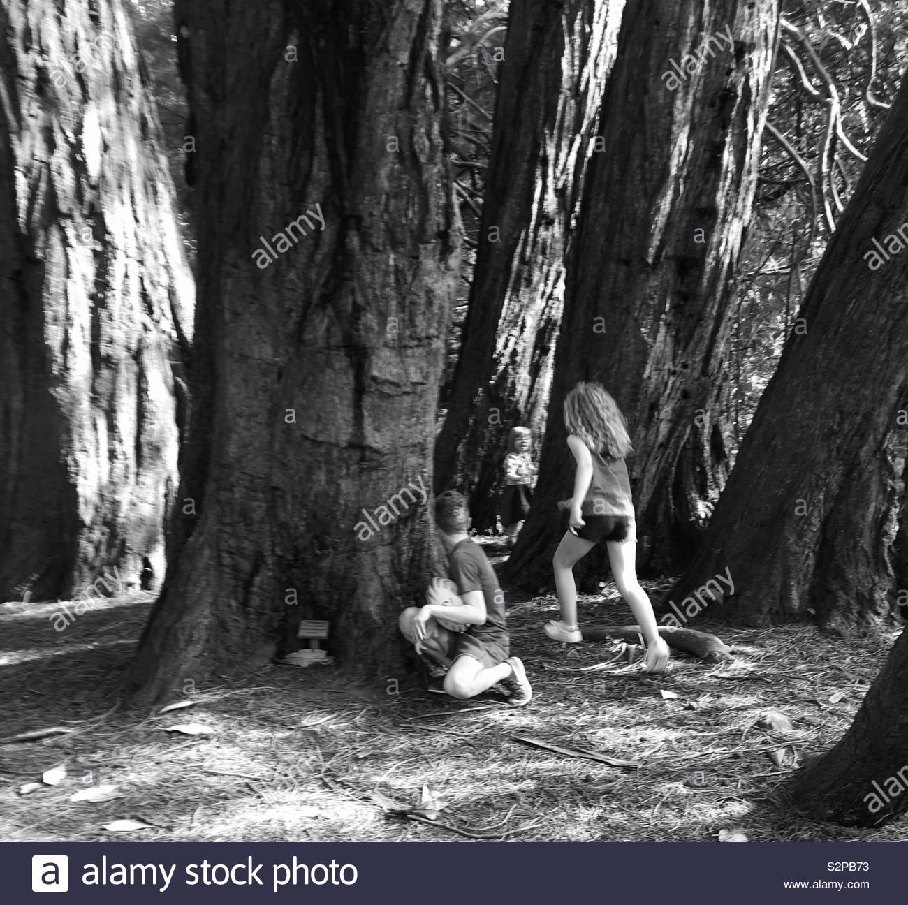Hide and seek, Castlewellan Park Stock Photo