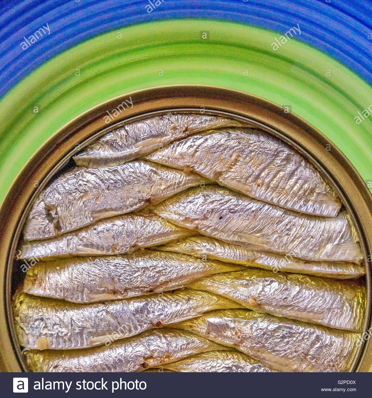 Brisling packed in a can. Also known as the European sprat, bristling, garvie, skipper, whitebait or Russian sardine. - Stock Image