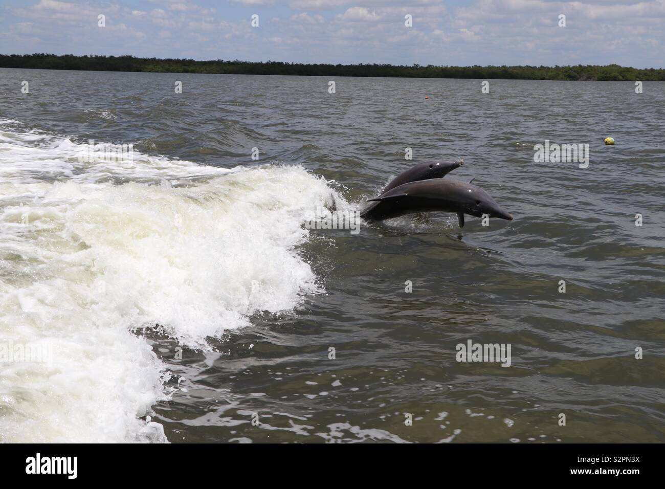 Dolphins jumping out sea - Stock Image