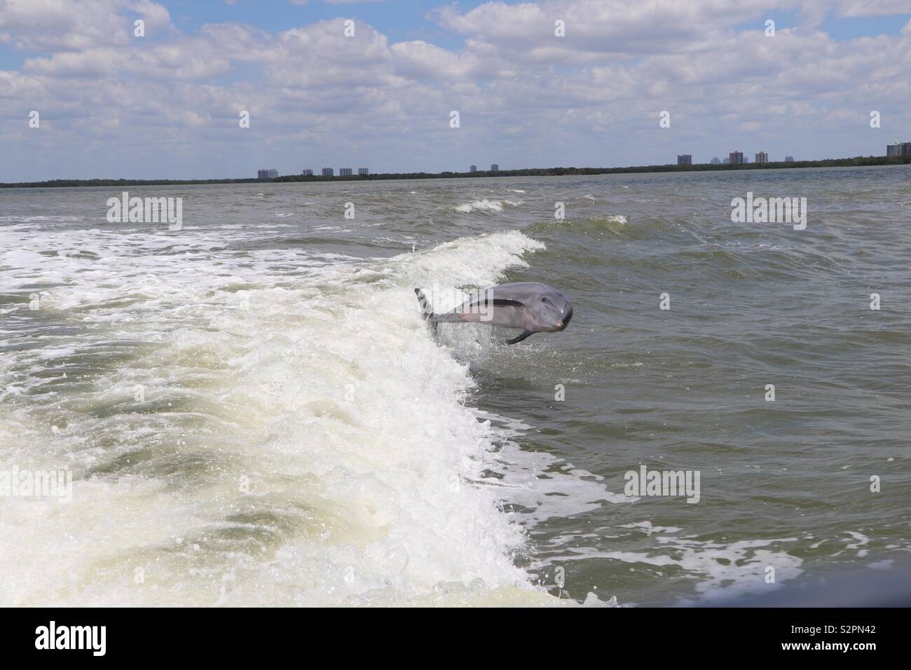 Dolphin jumping out sea - Stock Image