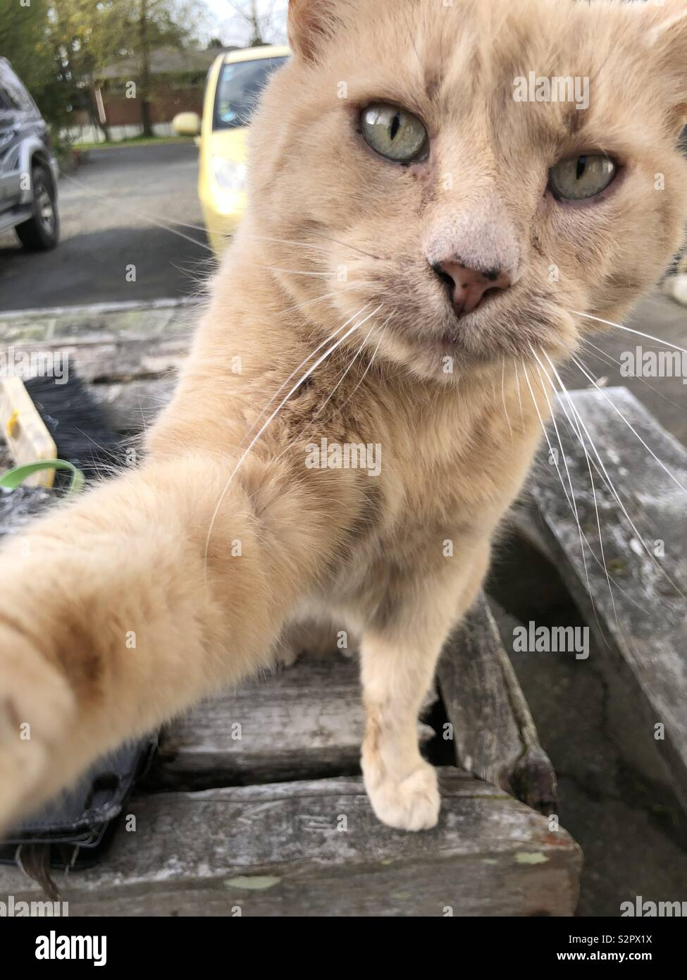 Cat saying hi, by tapping camera - Stock Image