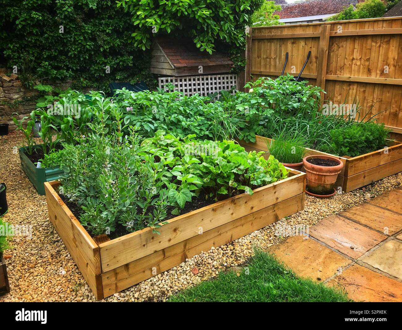 Small Vegetable Garden Stock Photo 311519675 Alamy