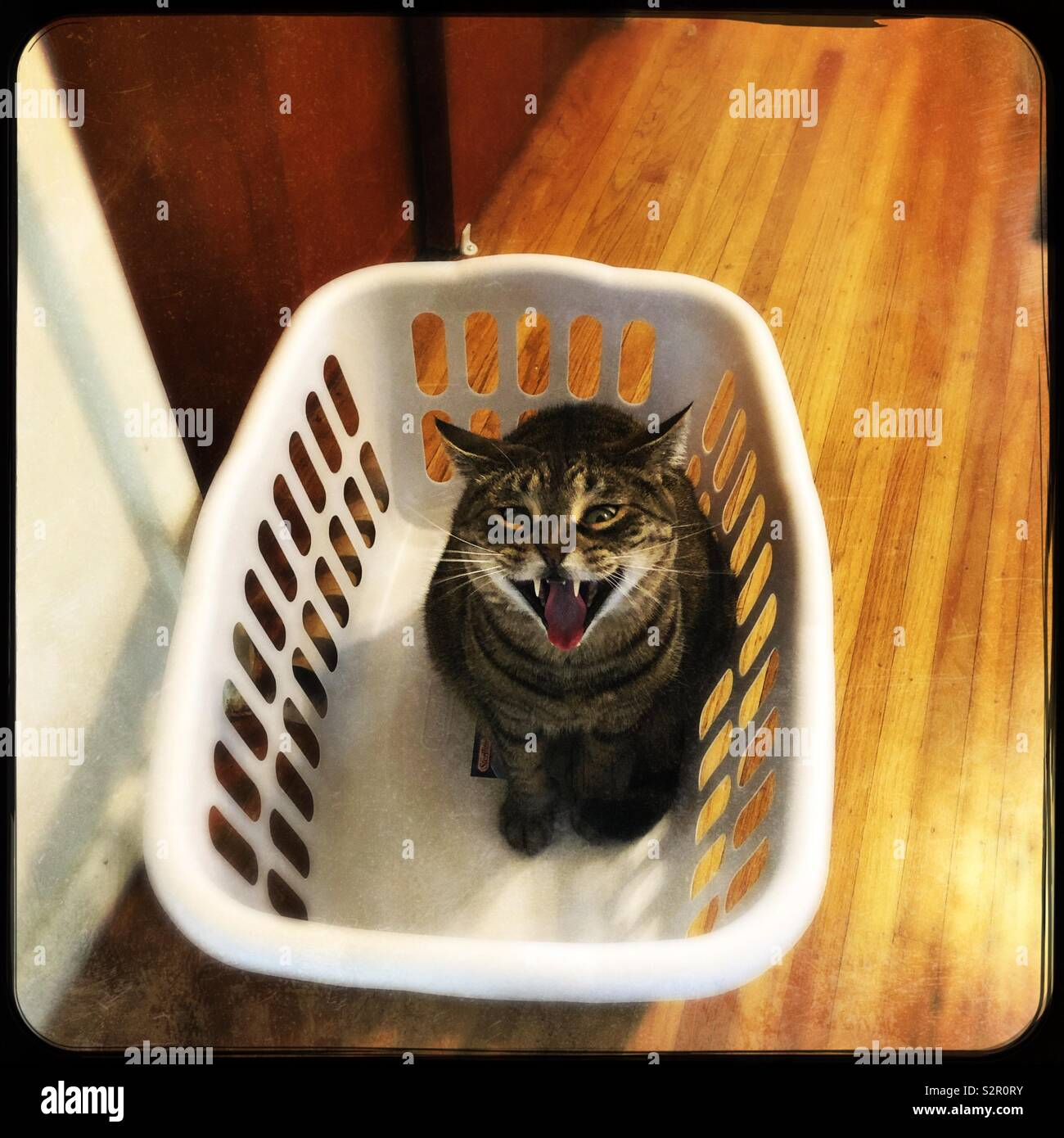This is my basket now!! - Stock Image