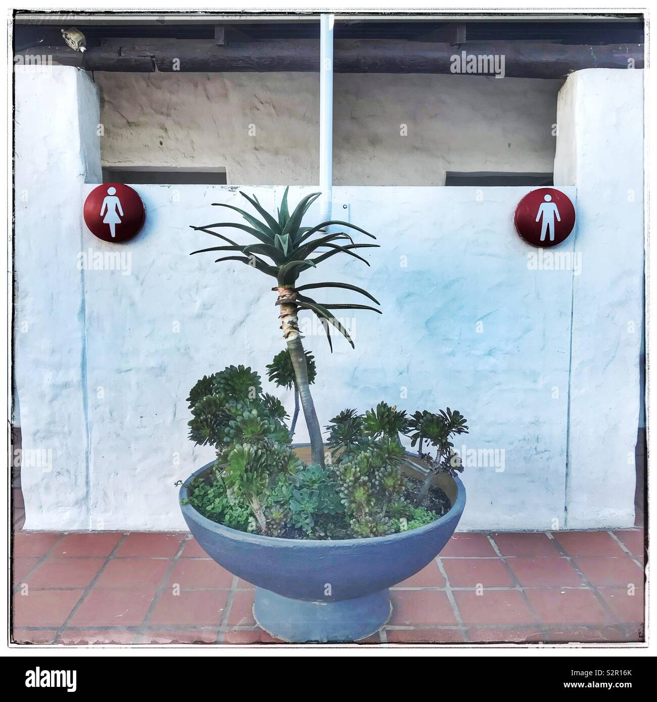 Pot with succulents at restrooms. - Stock Image