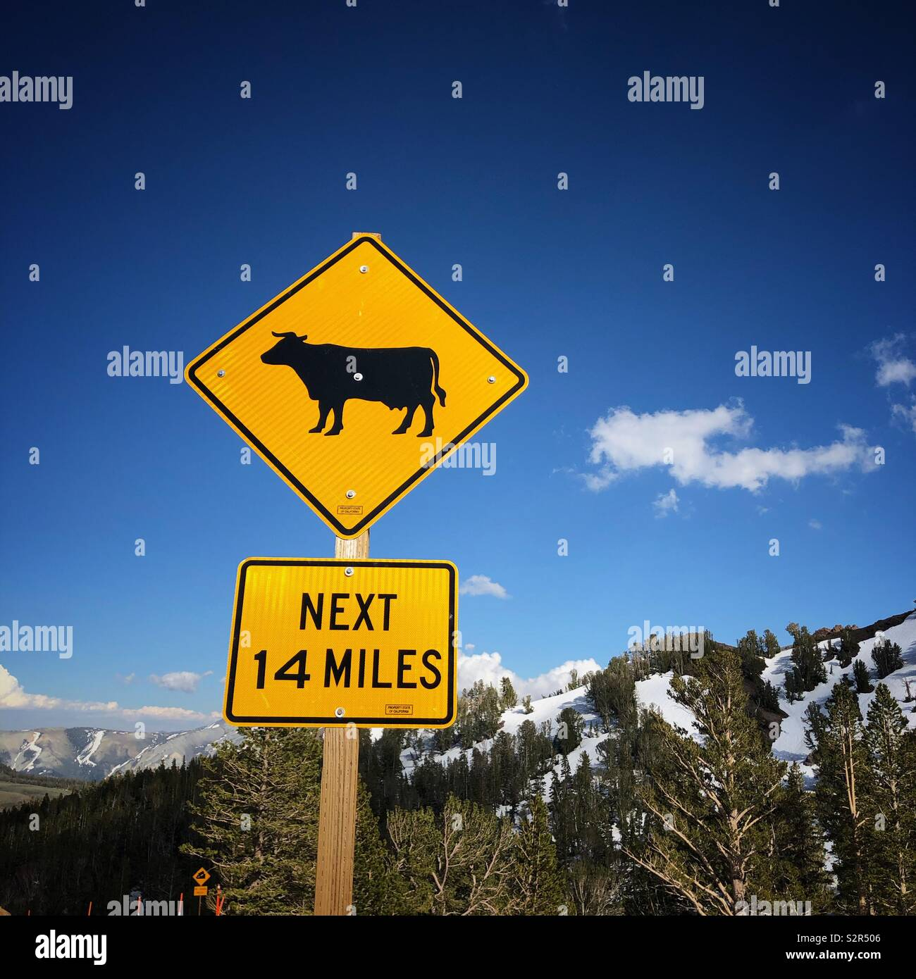 Don't hit the cows! Found at the top of Sonora Pass on Highway 108 in the California Sierras. Stock Photo