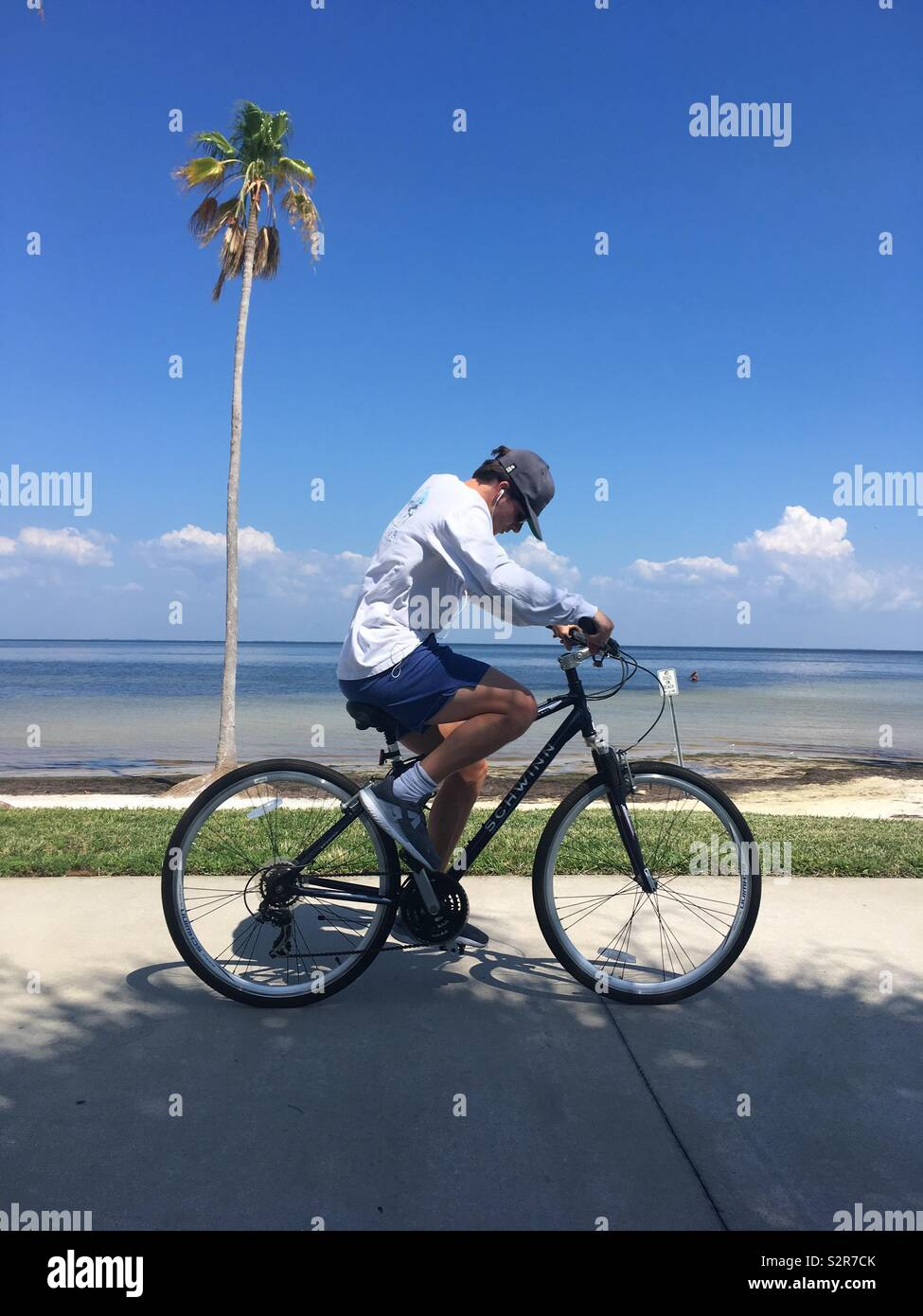 Man with cap on looking at the ground, cycling past a palm tree - Stock Image