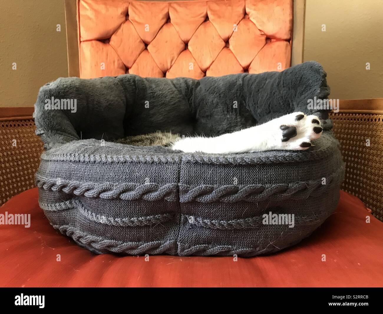 Cat paw - Stock Image
