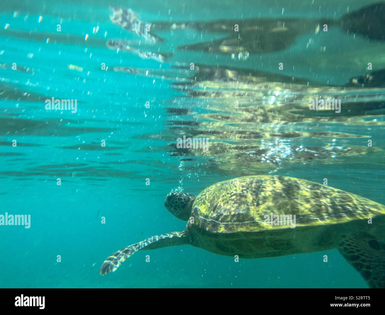 Swimming with turtles - Stock Image