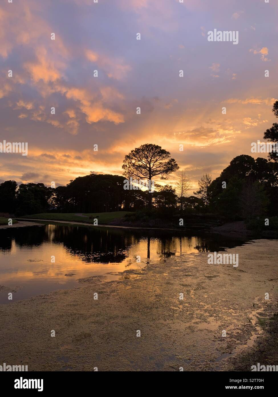 Colorful sunset on the lake with tree silhouettes and reflections on the water - Stock Image