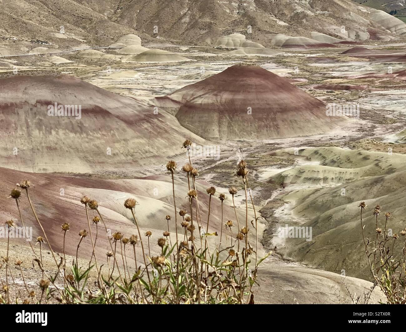 Desert flowers, John Day National Monument Stock Photo
