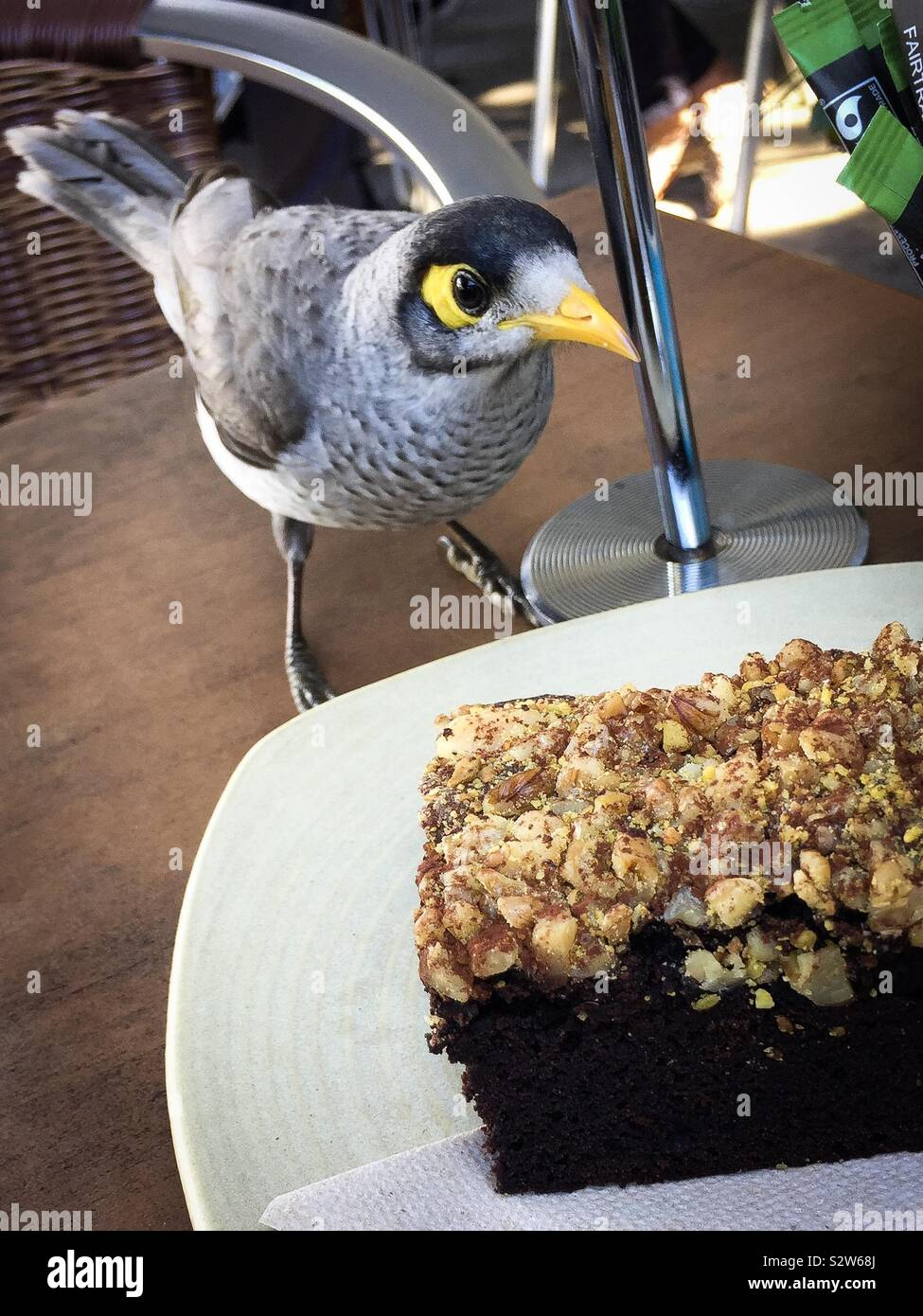 A cheeky wild bird contemplates eating the cake Stock Photo