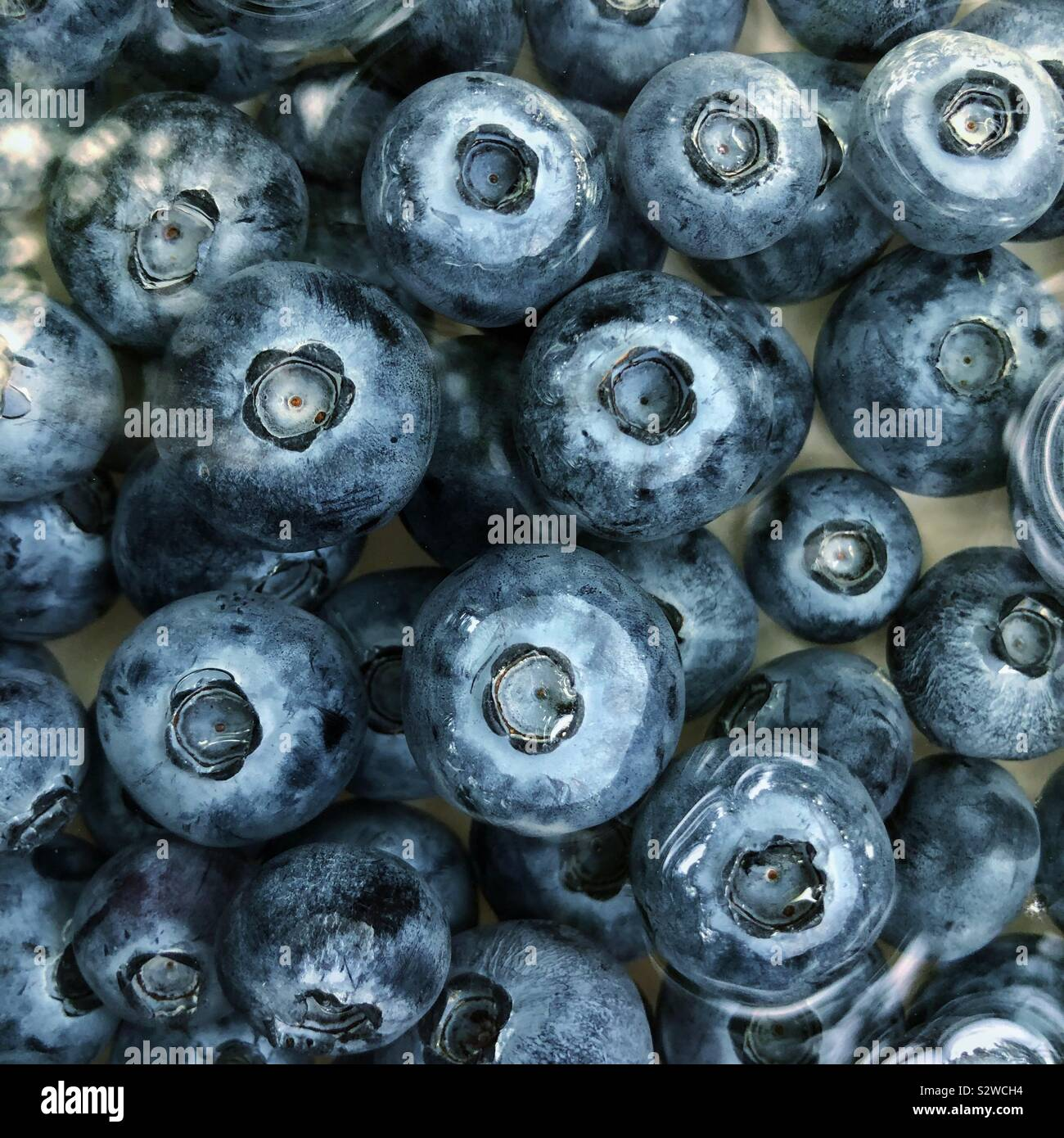 Bowl of floating blueberries. Stock Photo