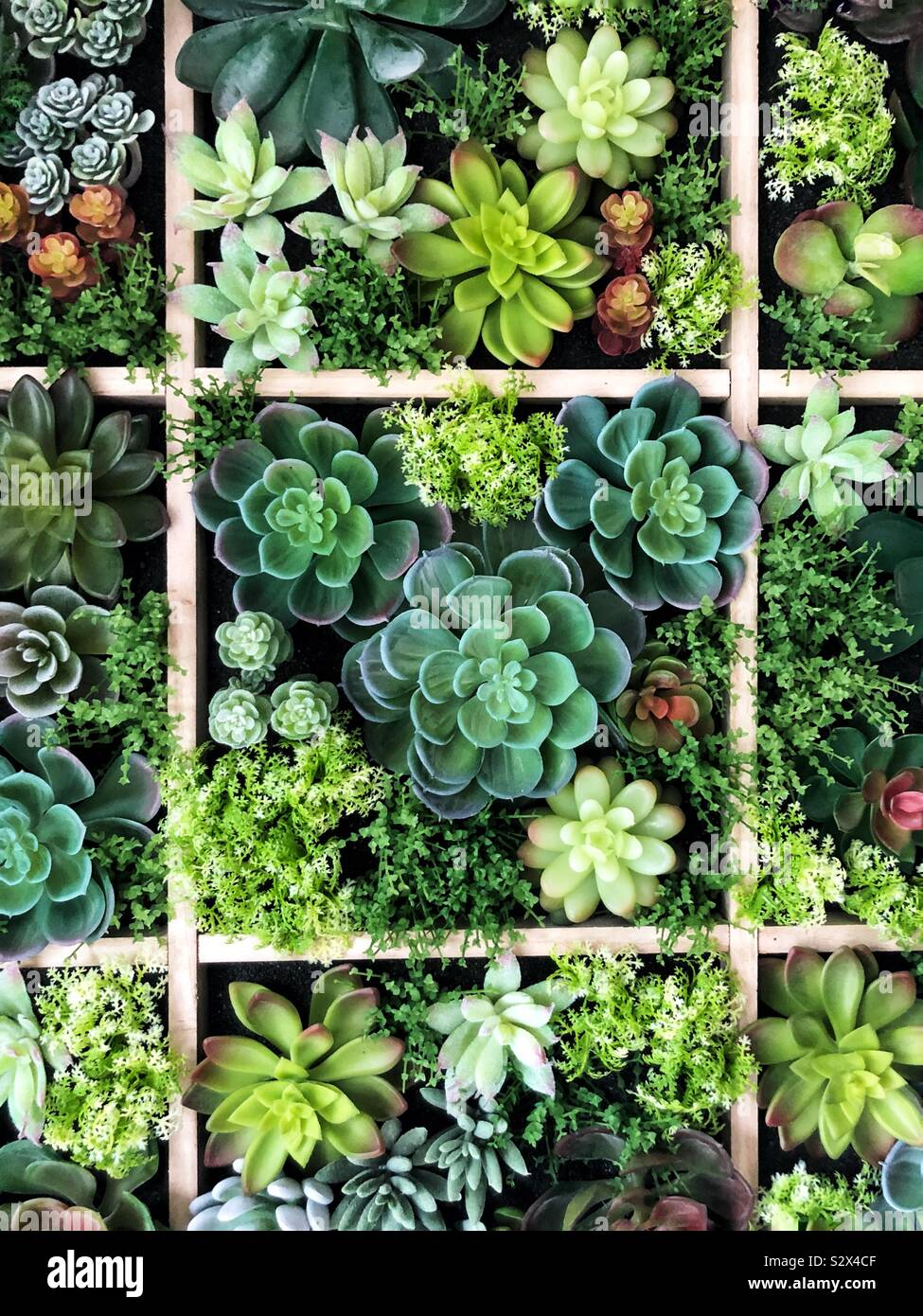 Succulent wall Stock Photo