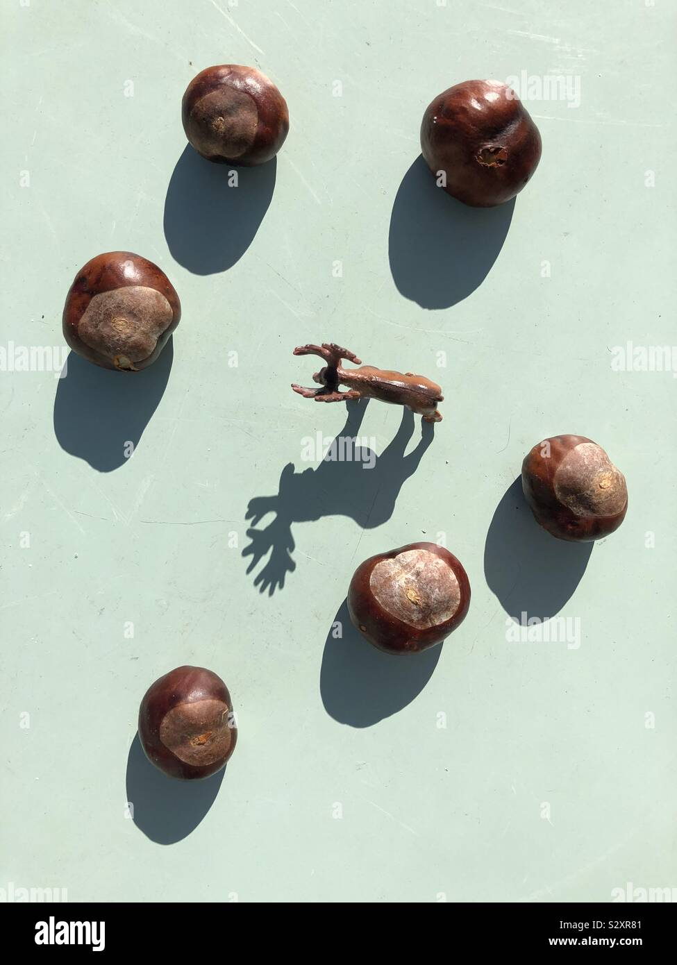 Autumn themed image of horse chestnuts conker and  shadow of a toy deer Stock Photo