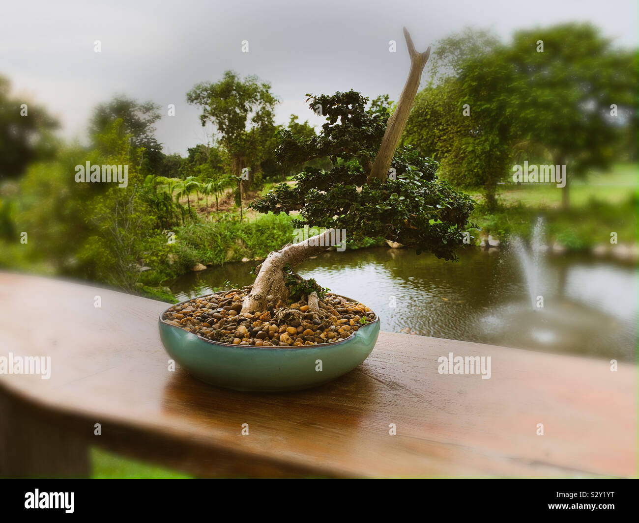 Bonsai Tree With A Fountain And Trees In The Background Stock Photo Alamy