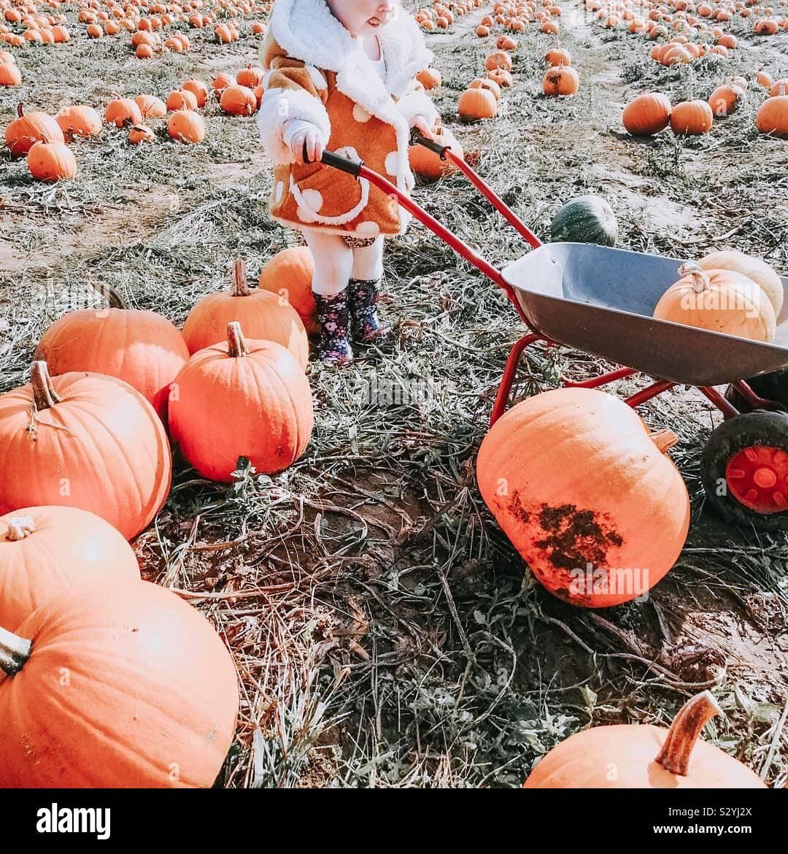 Little girl in a pumpkin field Stock Photo