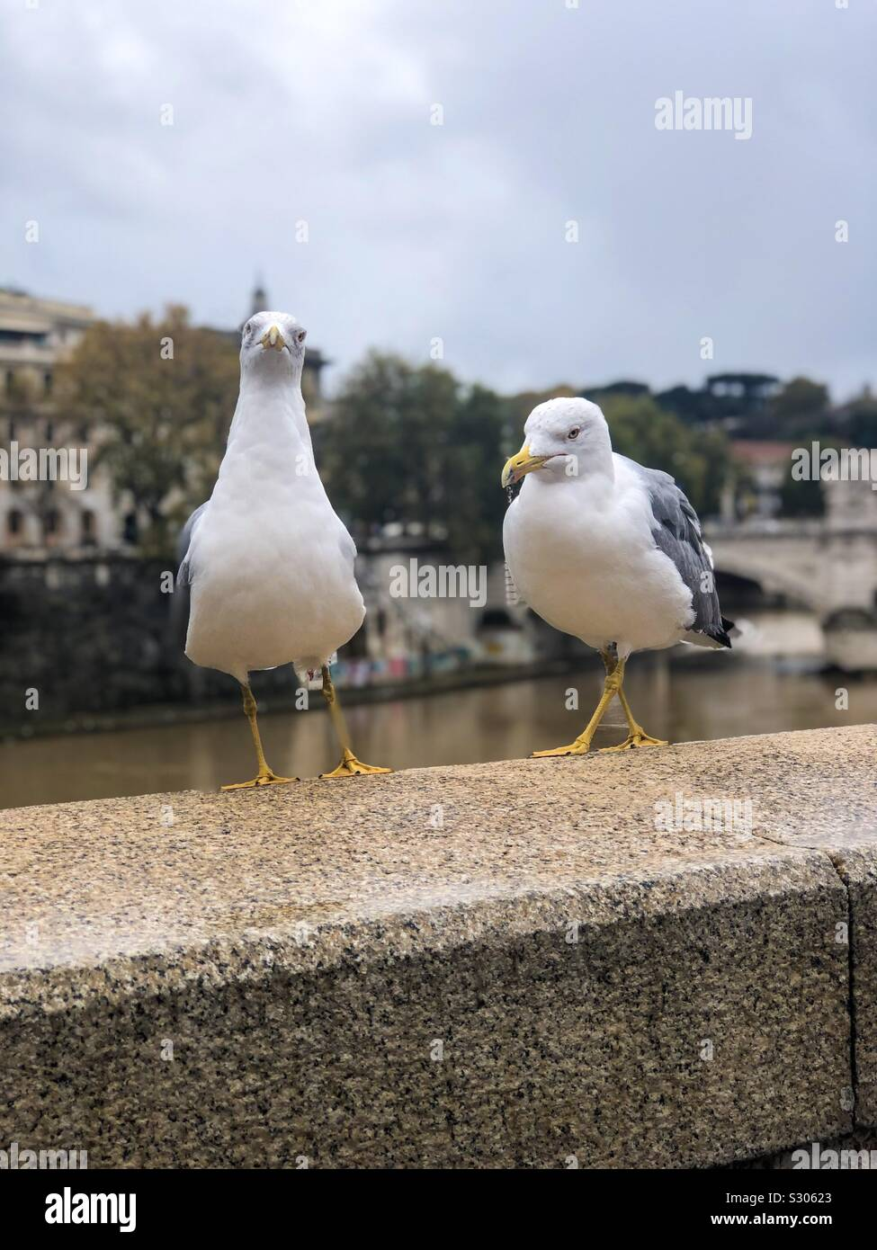 Seagulls perched on a stone wall in Rome. Stock Photo