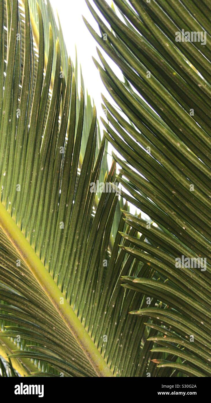 Tropical Palm Leaves Close Up Photography From Vietnam Stock Photo Alamy Domestika is the largest community for creative professionals. https www alamy com tropical palm leaves close up photography from vietnam image311643202 html