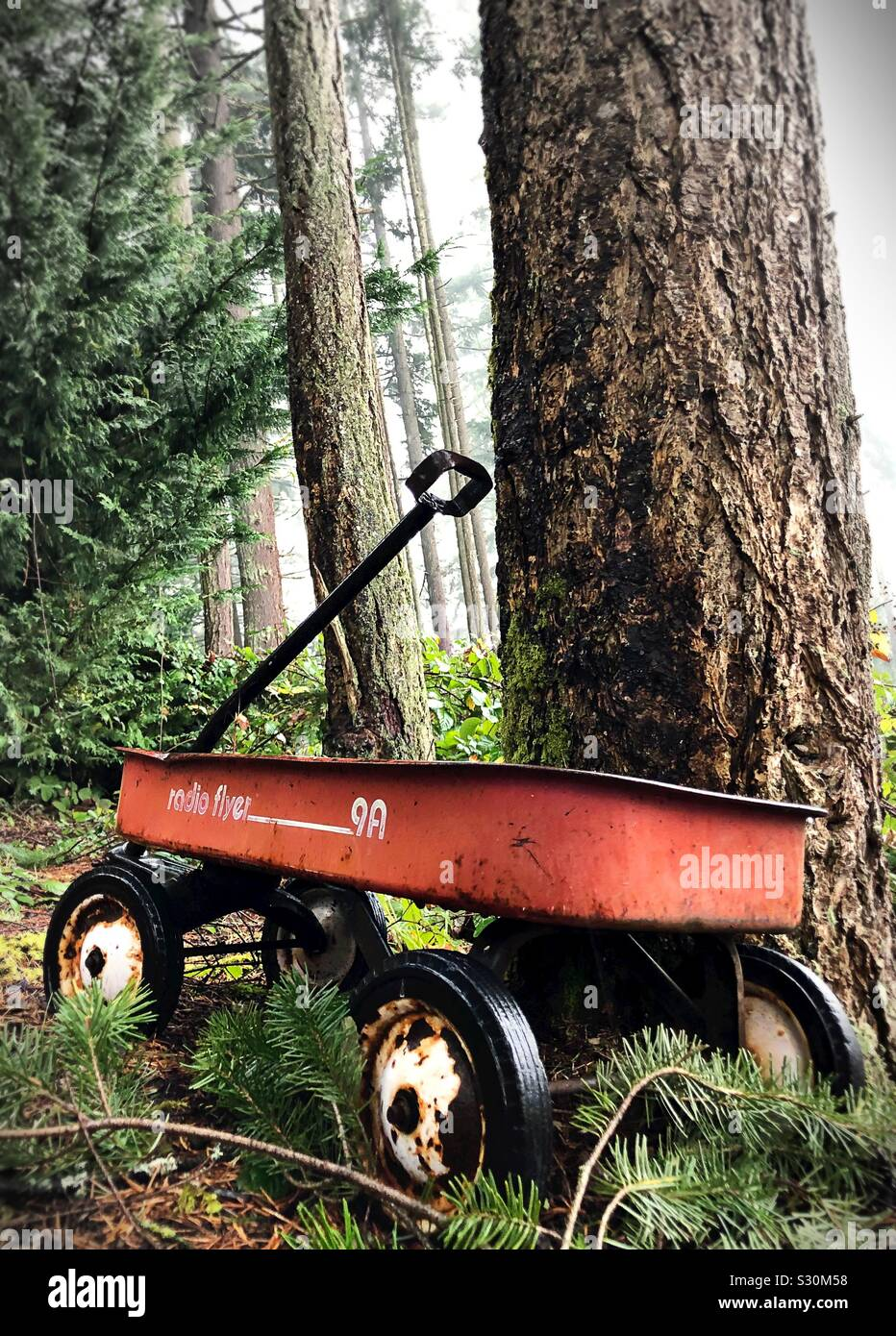 An old radio flyer wagon against a tree in a forest. Stock Photo