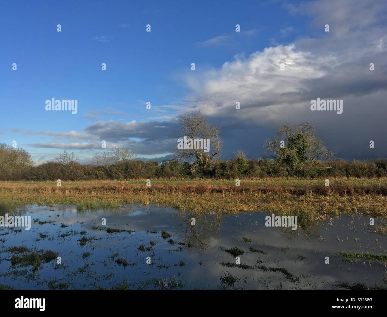 Flood meadow in the Stort valley at Tednambury near Bishops Stortford Hertfordshire Stock Photo