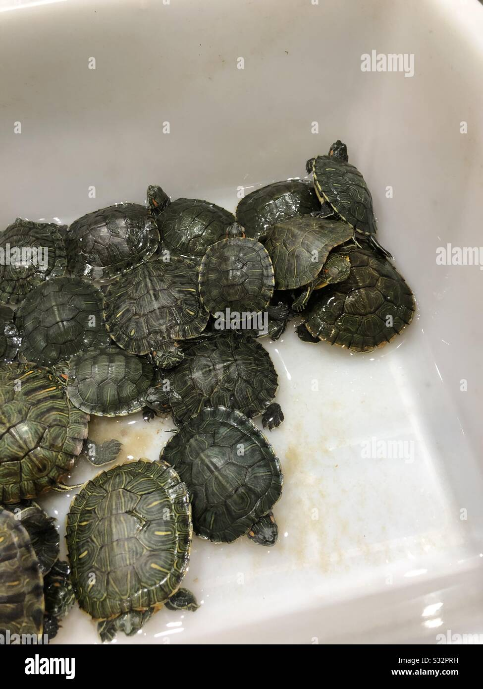A Lot Of Little Cute Pet Turtles Waiting For Their Owner To Buy Them Stock Photo Alamy