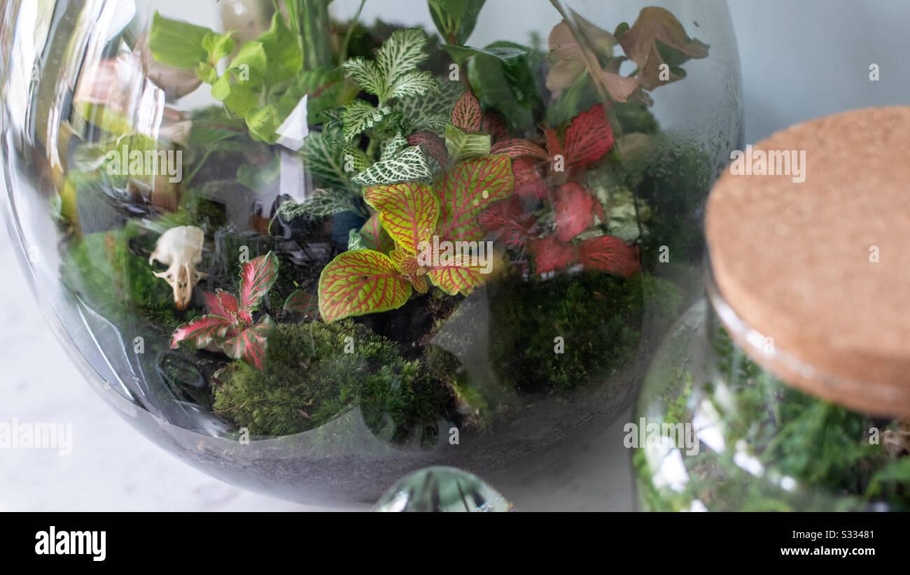 Small Plants In A Self Sustaining Ecosystem Terrarium Stock Photo Alamy