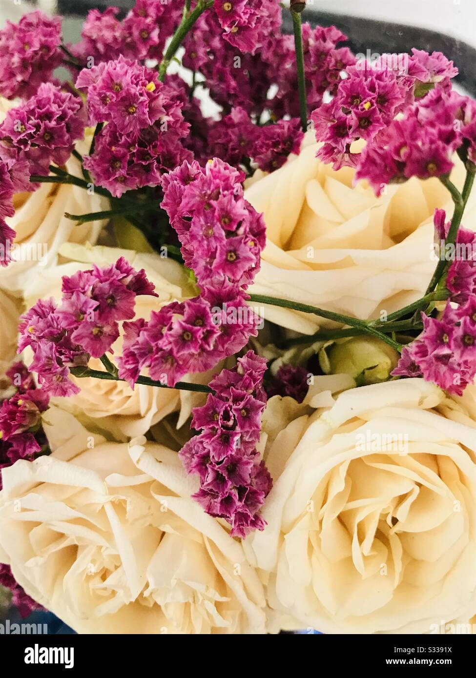 A Bouquet Full Of Cream Off White Aromatic Roses Circles With Dark Pink Filler Flowers