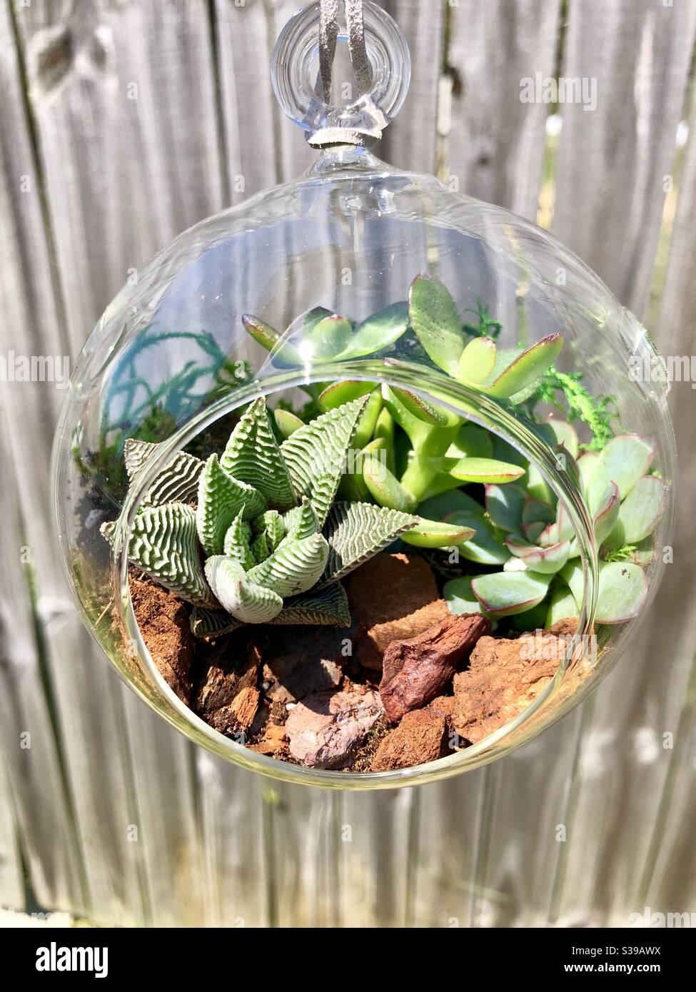 Succulents In A Hanging Terrarium Stock Photo Alamy