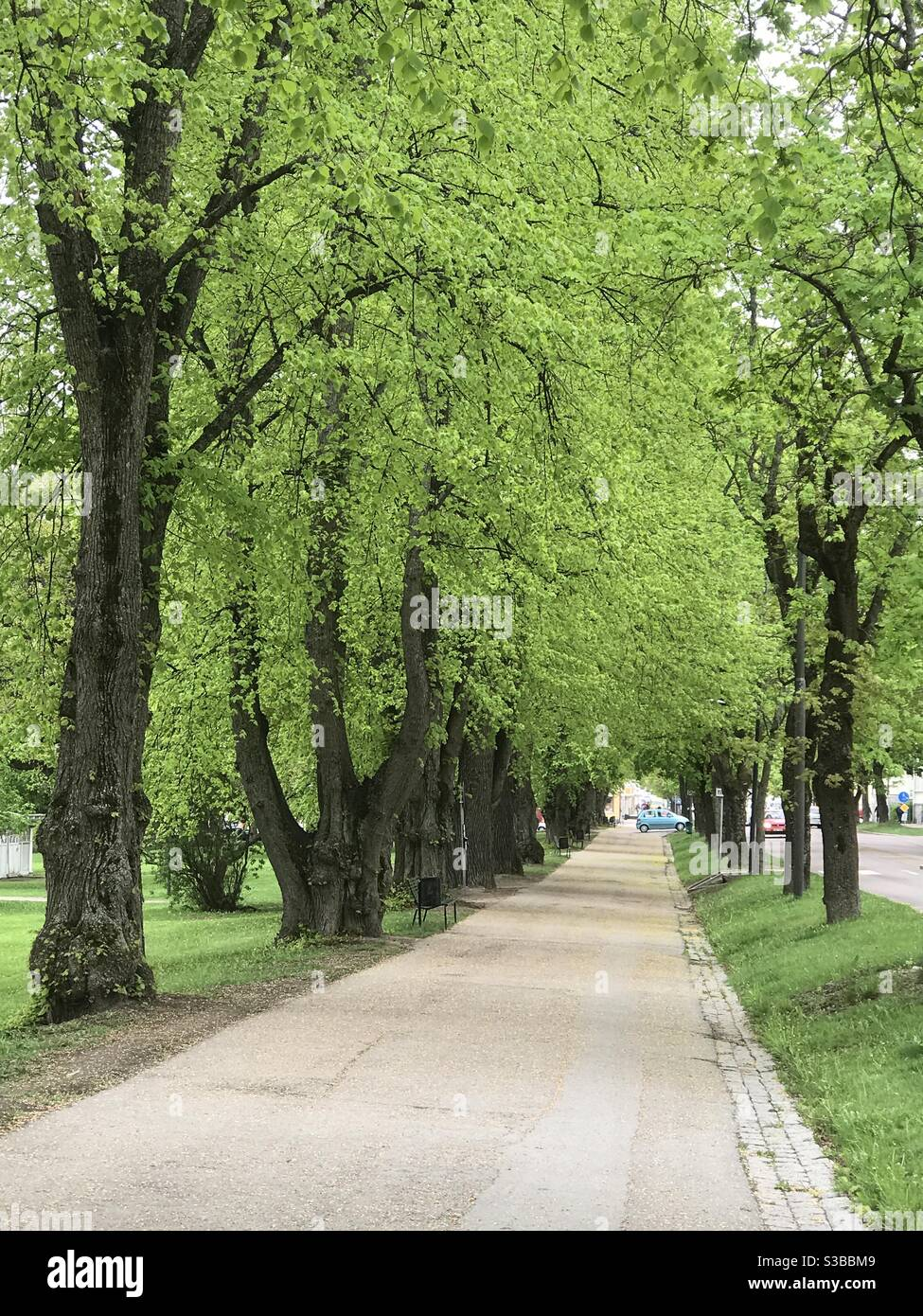 Early summer greenery Stock Photo
