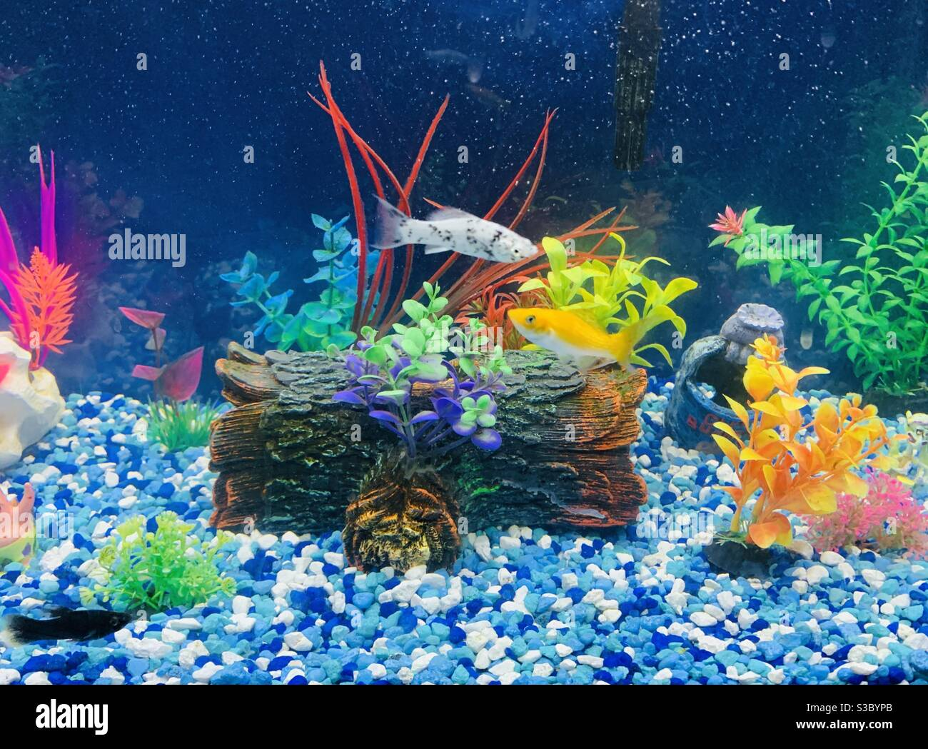 10 fish tank gallon setup best ❣️ 2021 for Rock