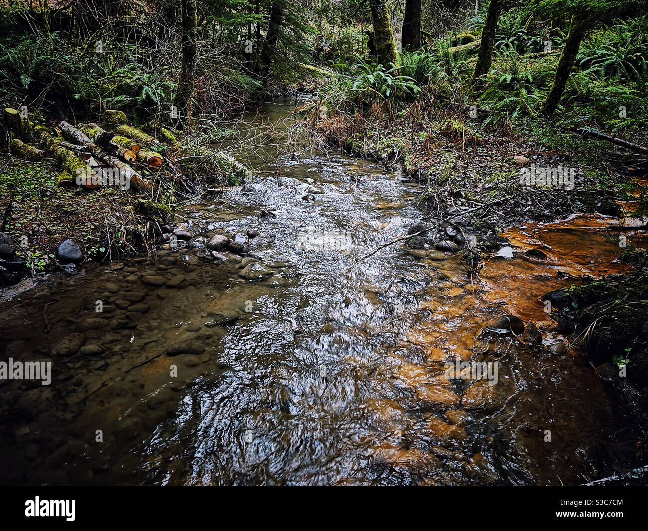 Glacial water comes down mt Rainier via Tennas creek, WA Stock Photo