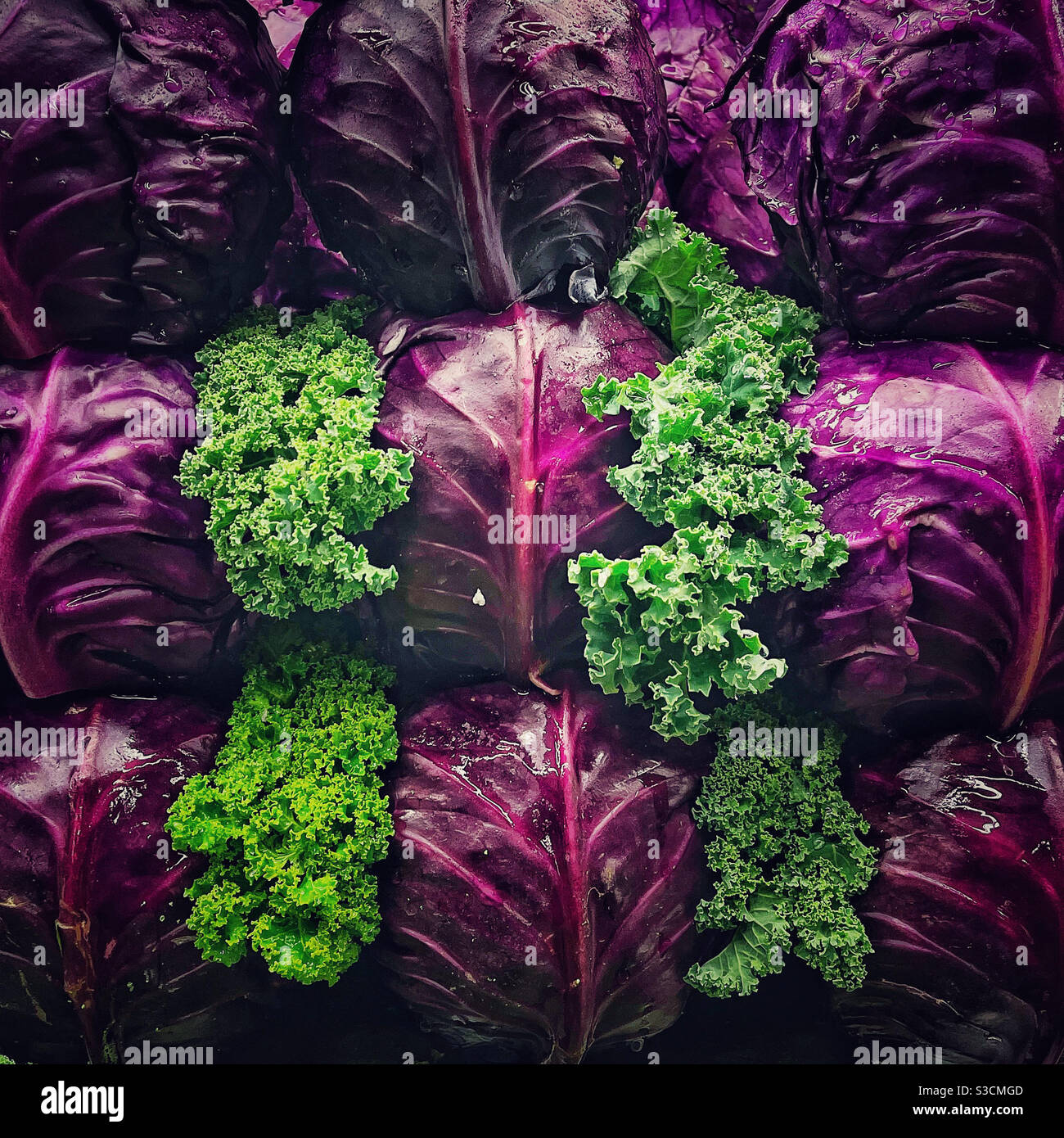 Kale and red cabbage on display Stock Photo