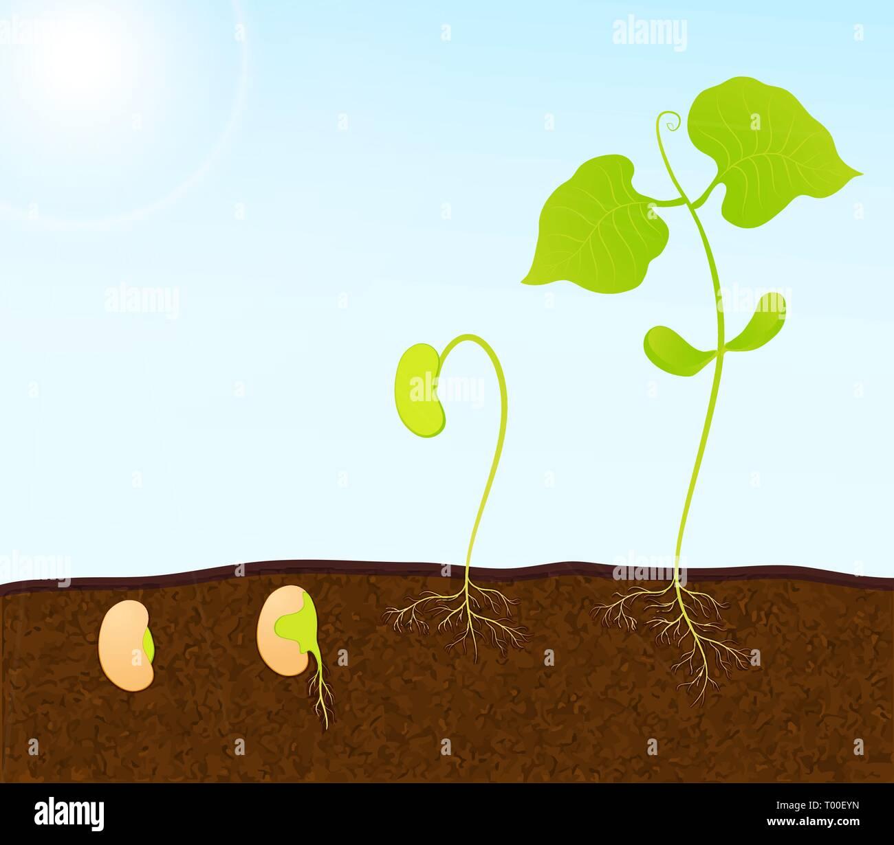 green plant seedling vector - Stock Vector
