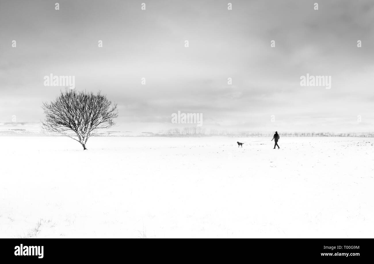Minimalist black and white image of a distant man walking dog in flat snow covered winter landscape with a lone tree - Stock Image