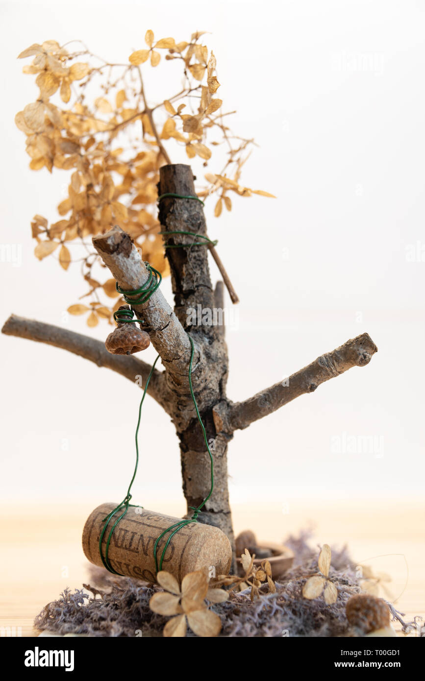 Tree with a swing from a crown cork. - Stock Image