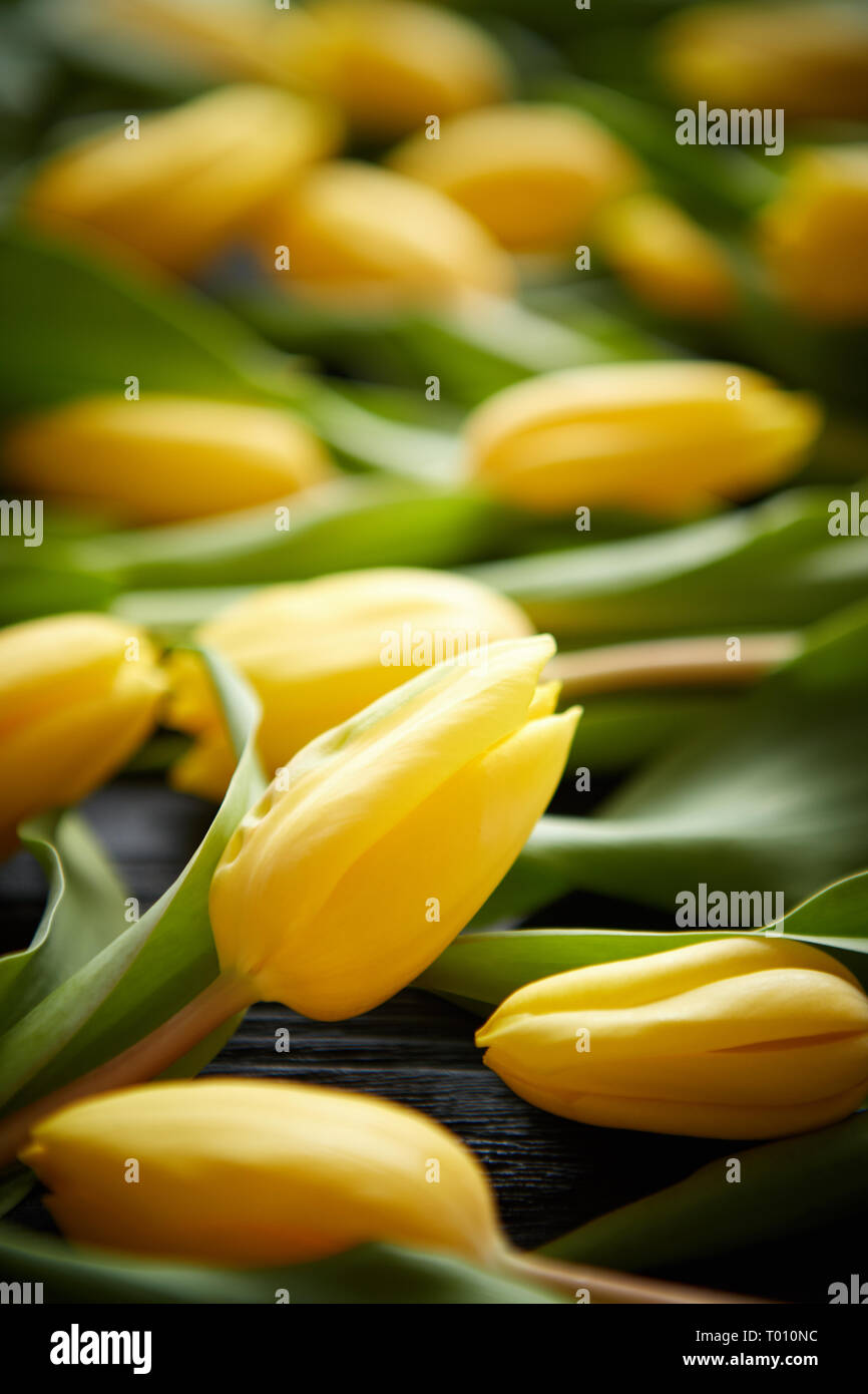Yellow tulips placed on black table. Top view with flat lay - Stock Image