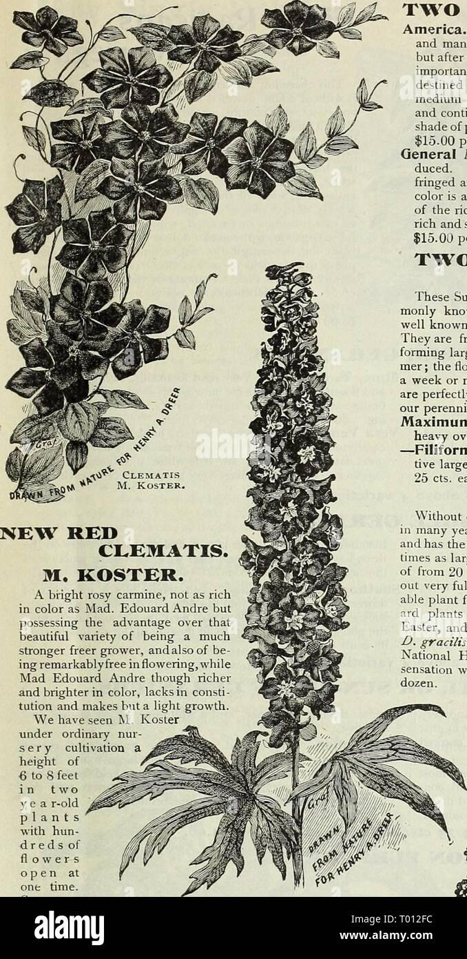 The Newest Advantage Of Being Rich In >> Dreer S Garden Calendar 1899 Dreersgardencale1899henr Year 1899