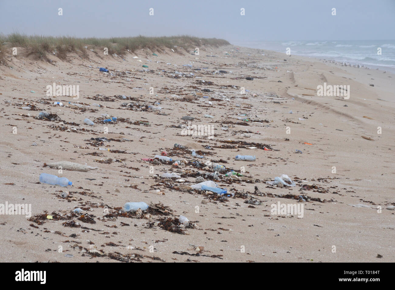 polluted beach in eastern Oman - Stock Image