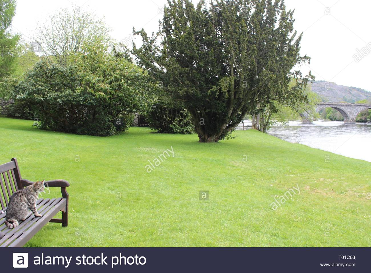 Brilliant Cat Sitting Wooden Seat Outdoors Cat Stock Photos Cat Ocoug Best Dining Table And Chair Ideas Images Ocougorg