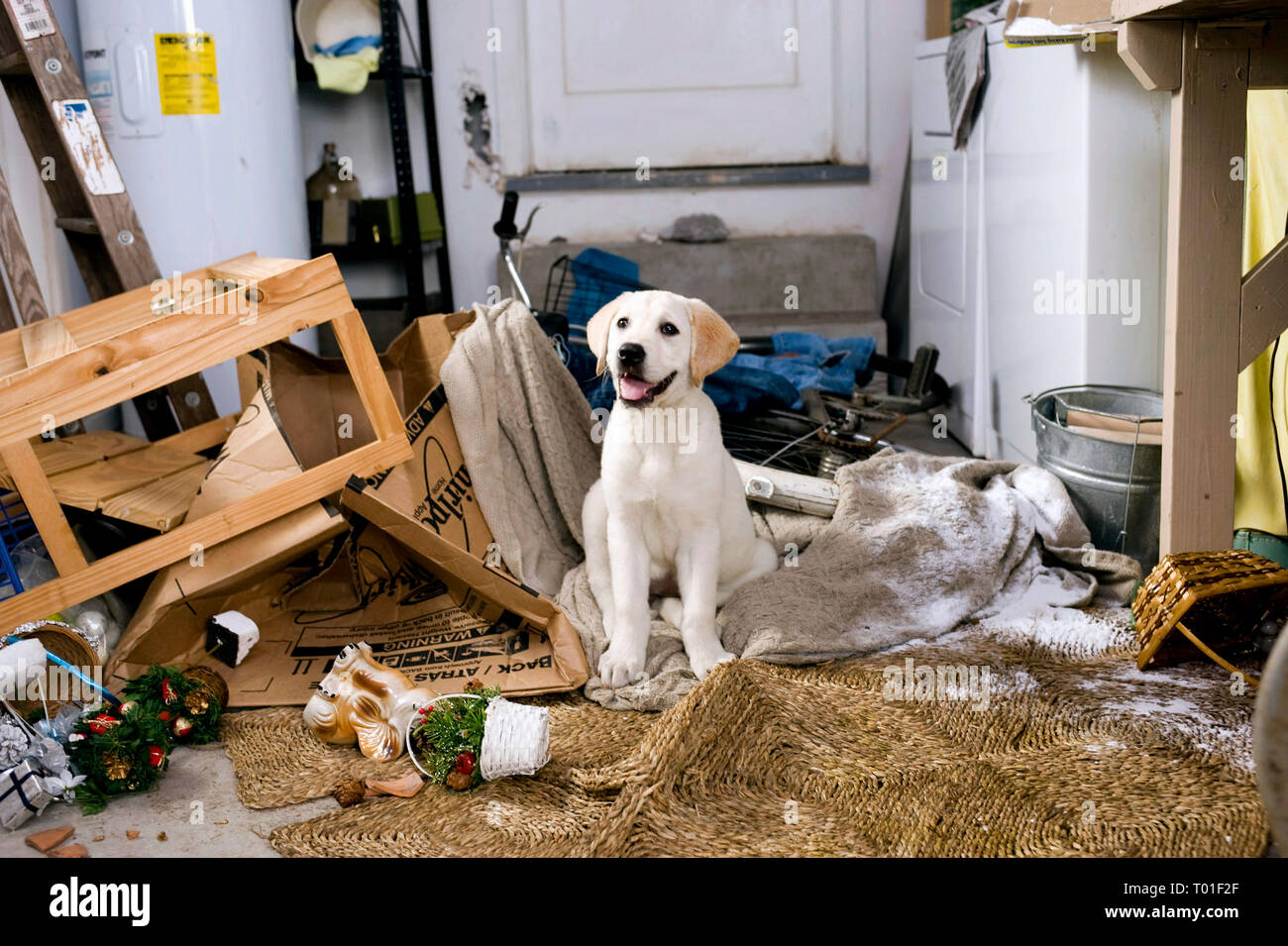 Marley Marley And Me 2008 Stock Photo Alamy