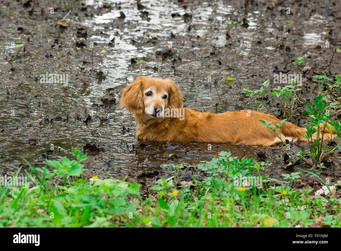 Little dog lying on the grass in the park, nature, autumn - Stock Image