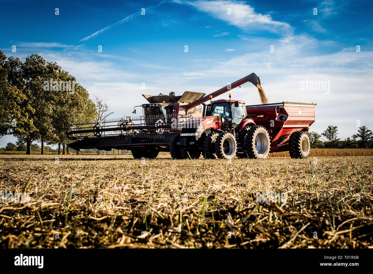 Grain harvester finishing up soybean harvest, Bond County, Illinois - Stock Image