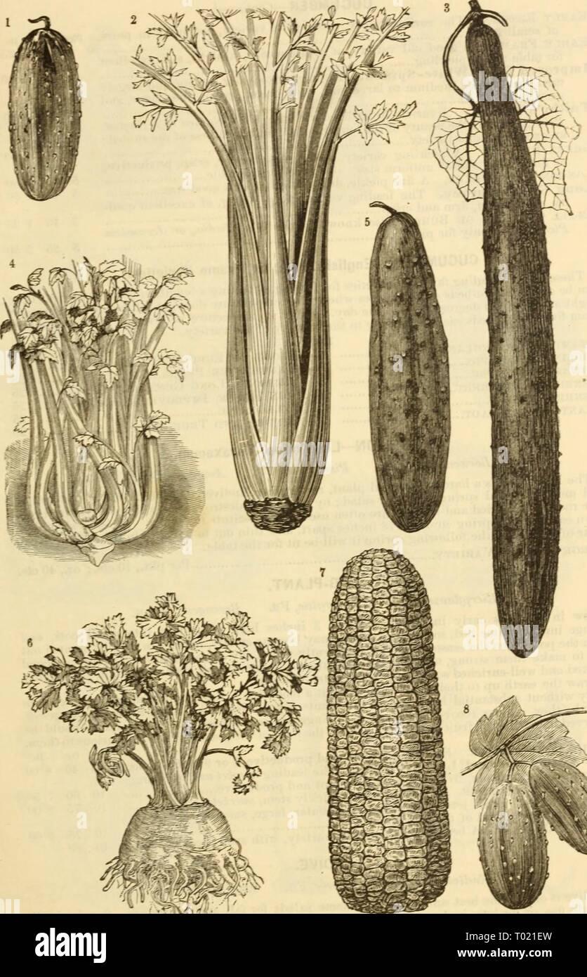 Dreer's garden calendar : 1881   dreersgardencale1881henr