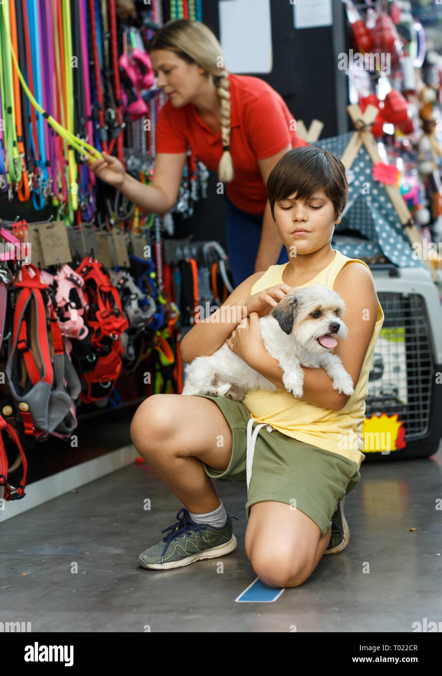 Preteen boy holding havanese pup while shopping with mother in pet shop - Stock Image