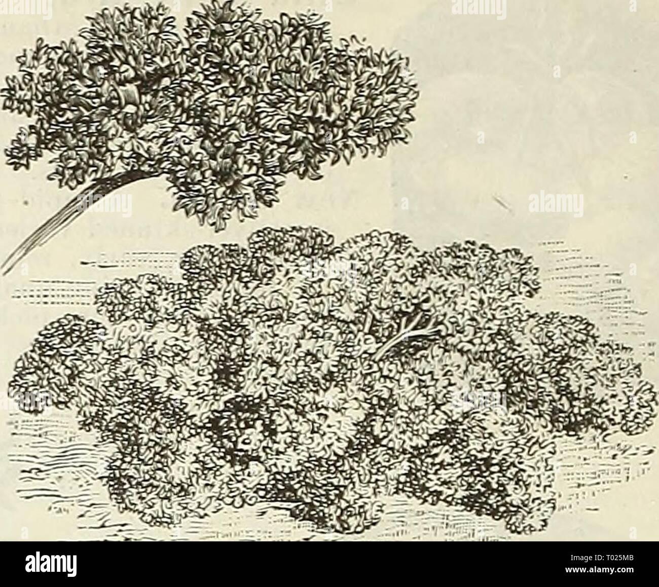 Dreer's garden calendar for 1888   dreersgardencale1888henr